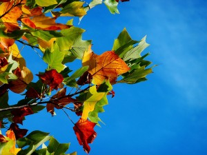 fall events in Kennesaw
